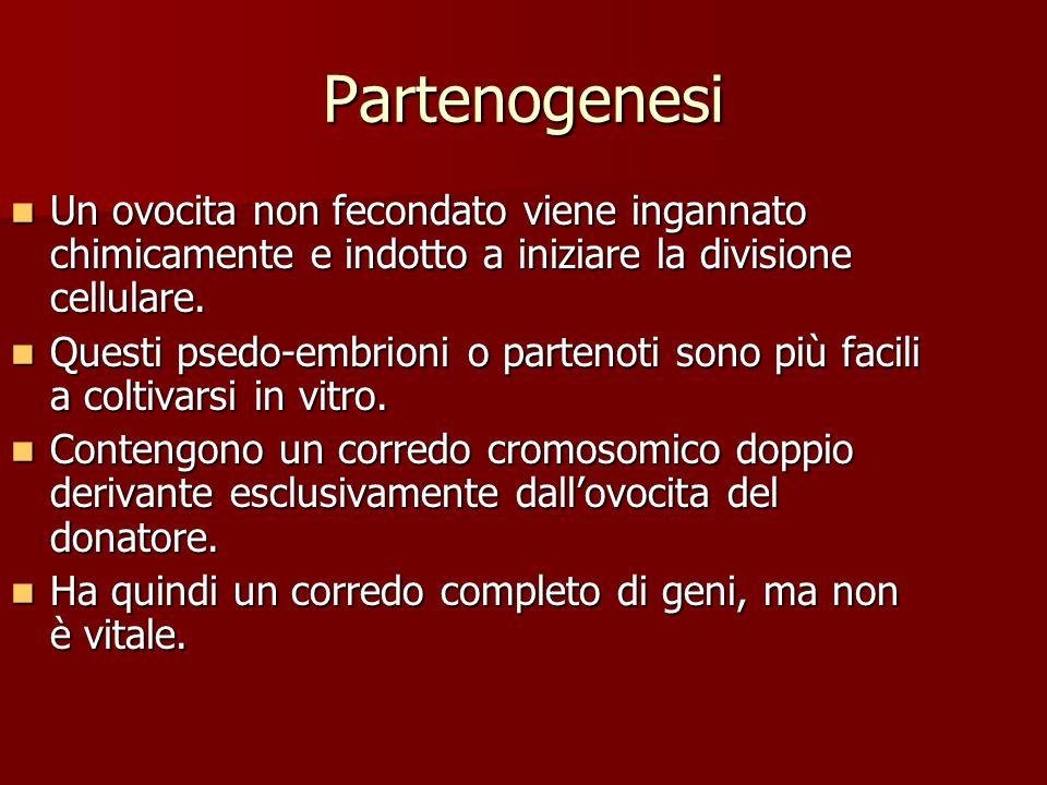 Partenogenesi Un ovocita non fecondato viene ingannato chimicamente e indotto a iniziare la divisione cellulare.