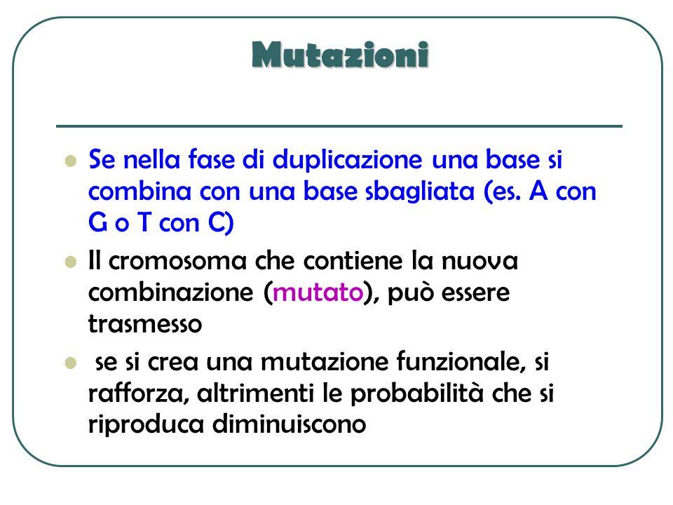 Mutazioni Se nella fase di duplicazione una base si combina con una base sbagliata (es. A con G o T con C)