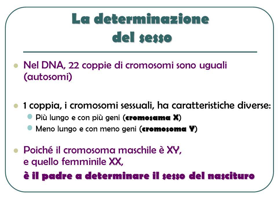 La determinazione del sesso