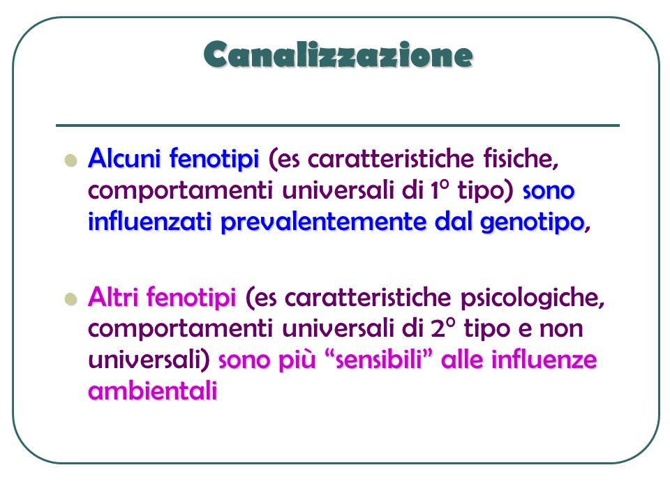 Canalizzazione Alcuni fenotipi (es caratteristiche fisiche, comportamenti universali di 1° tipo) sono influenzati prevalentemente dal genotipo,