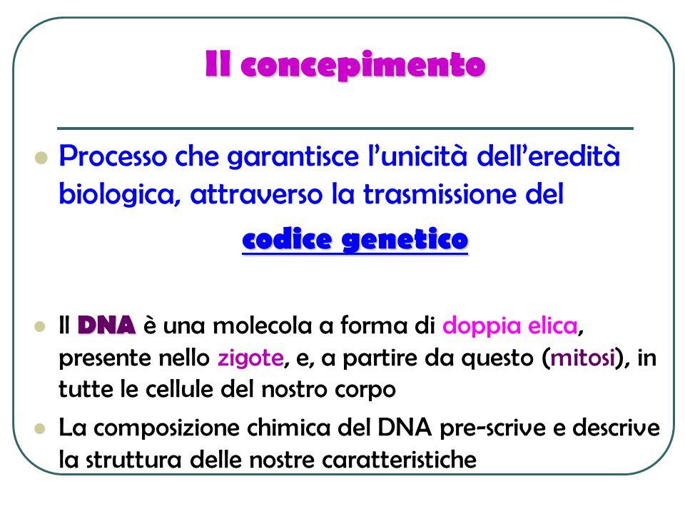 Il concepimento Processo che garantisce l'unicità dell'eredità biologica, attraverso la trasmissione del.