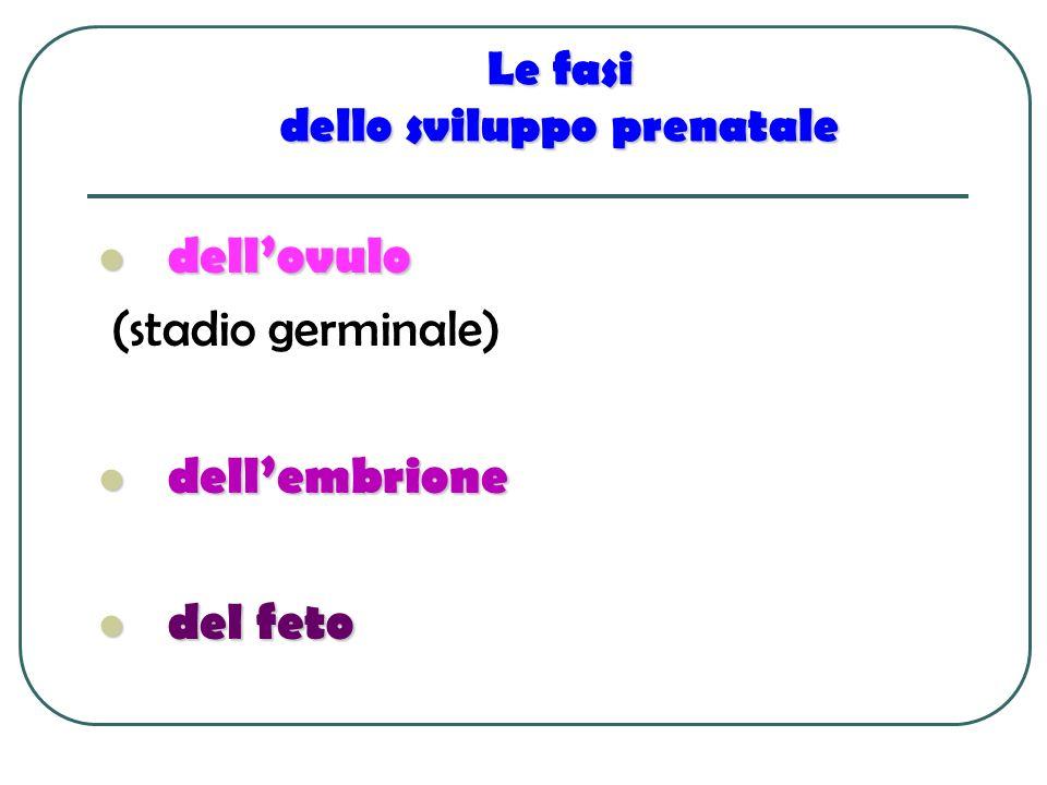 Le fasi dello sviluppo prenatale