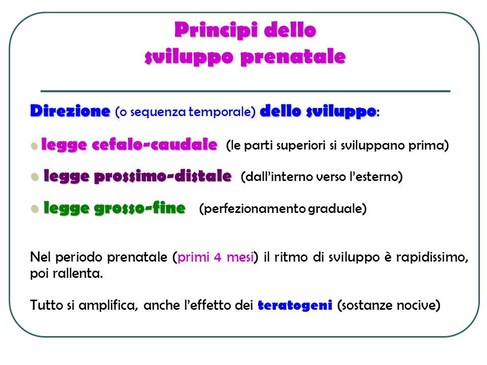 Principi dello sviluppo prenatale