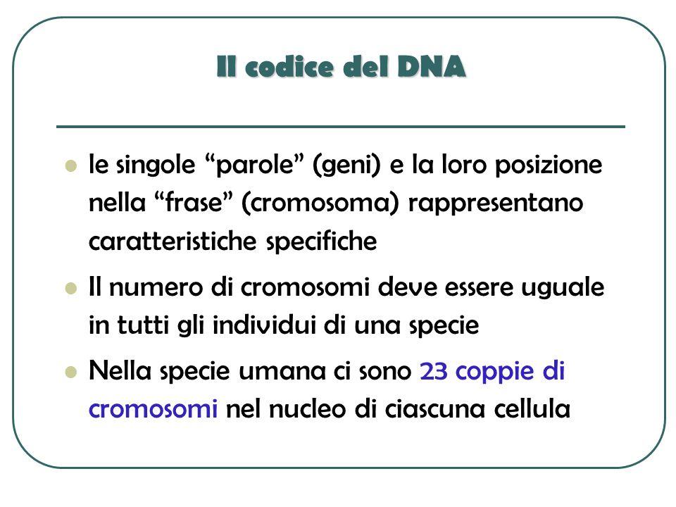 Il codice del DNA le singole parole (geni) e la loro posizione nella frase (cromosoma) rappresentano caratteristiche specifiche.
