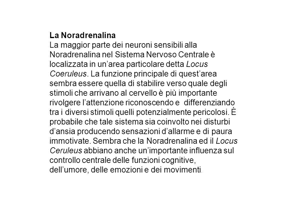 La Noradrenalina