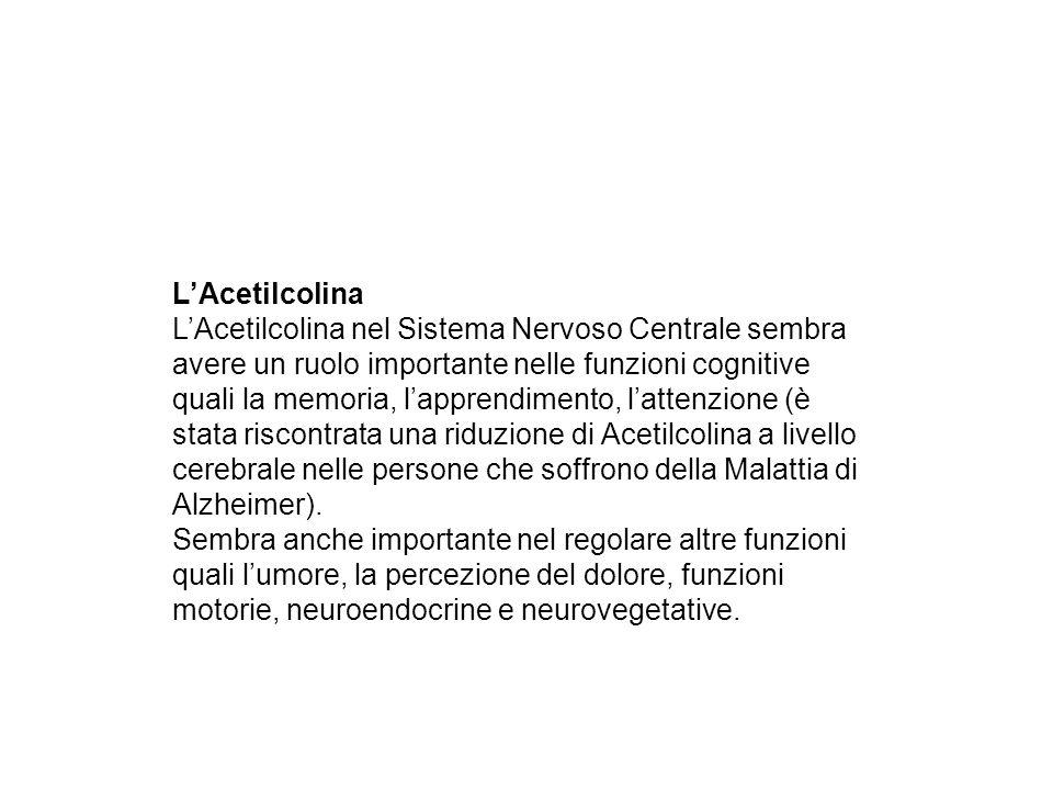 L'Acetilcolina