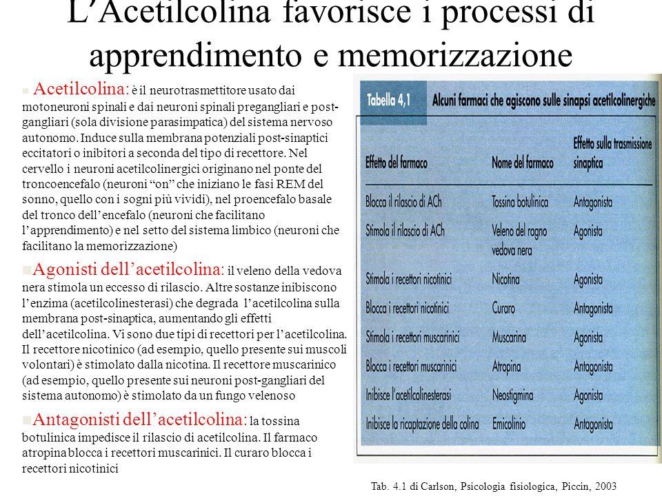 L'Acetilcolina favorisce i processi di apprendimento e memorizzazione