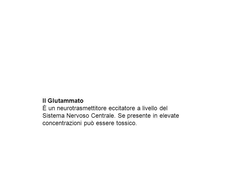 Il Glutammato È un neurotrasmettitore eccitatore a livello del Sistema Nervoso Centrale.