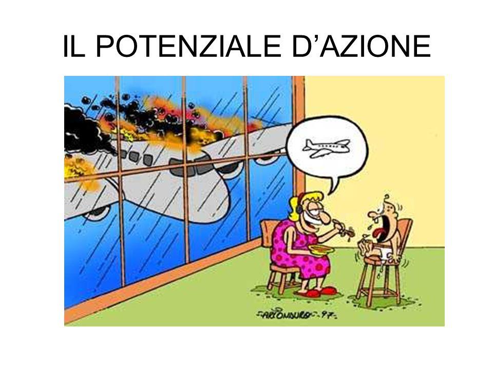 IL POTENZIALE D'AZIONE