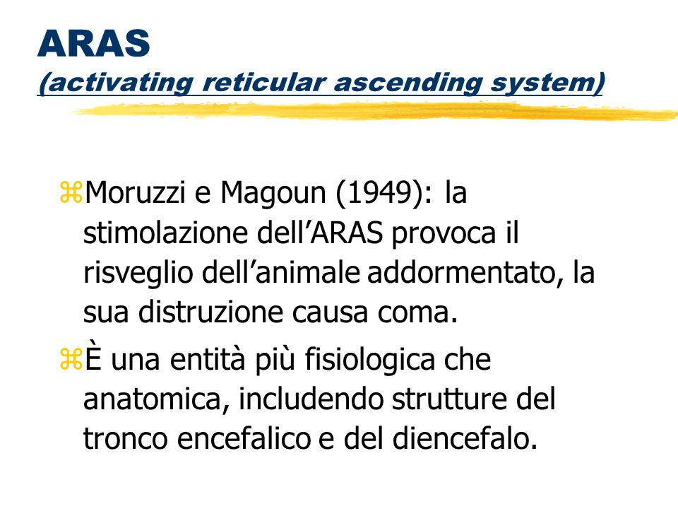 ARAS (activating reticular ascending system)