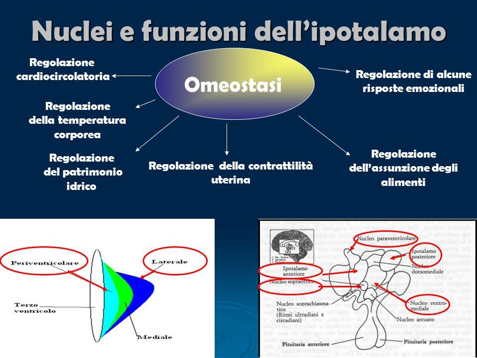 Nuclei e funzioni dell'ipotalamo