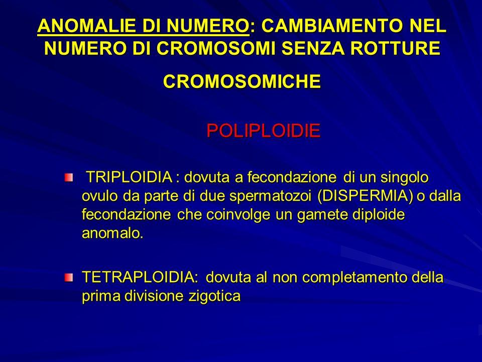 ANOMALIE DI NUMERO: CAMBIAMENTO NEL NUMERO DI CROMOSOMI SENZA ROTTURE CROMOSOMICHE