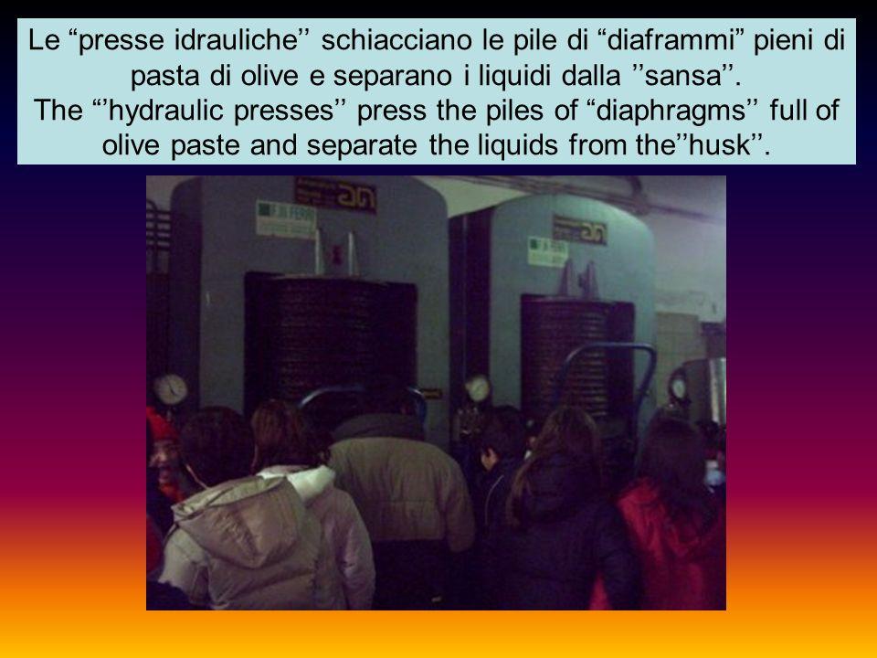 Le presse idrauliche'' schiacciano le pile di diaframmi pieni di pasta di olive e separano i liquidi dalla ''sansa''.