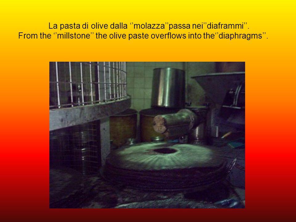 La pasta di olive dalla ''molazza''passa nei''diaframmi''
