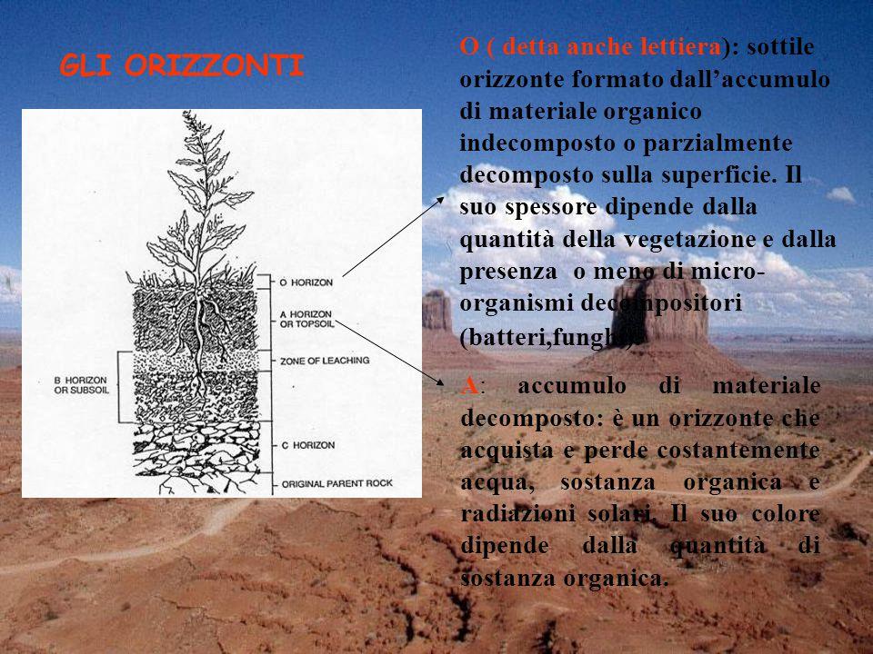 O ( detta anche lettiera): sottile orizzonte formato dall'accumulo di materiale organico indecomposto o parzialmente decomposto sulla superficie. Il suo spessore dipende dalla quantità della vegetazione e dalla presenza o meno di micro-organismi decompositori (batteri,funghi).