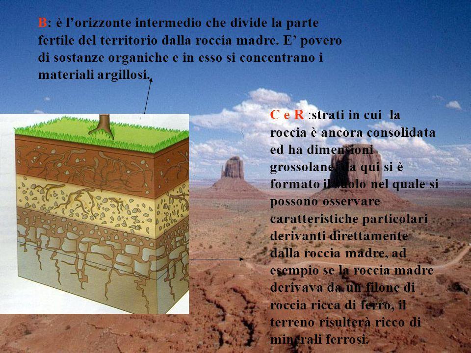 B: è l'orizzonte intermedio che divide la parte fertile del territorio dalla roccia madre. E' povero di sostanze organiche e in esso si concentrano i materiali argillosi.