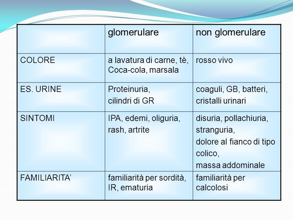 glomerulare non glomerulare COLORE