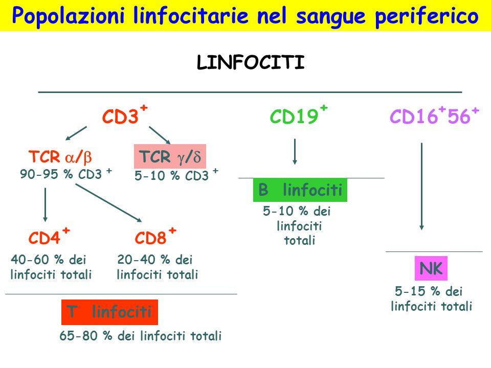 Popolazioni linfocitarie nel sangue periferico