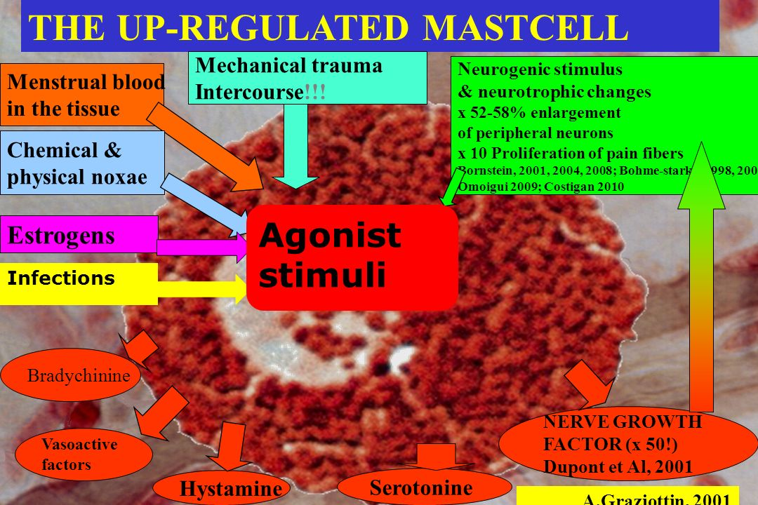 THE UP-REGULATED MASTCELL