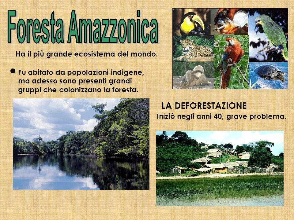 Foresta Amazzonica LA DEFORESTAZIONE