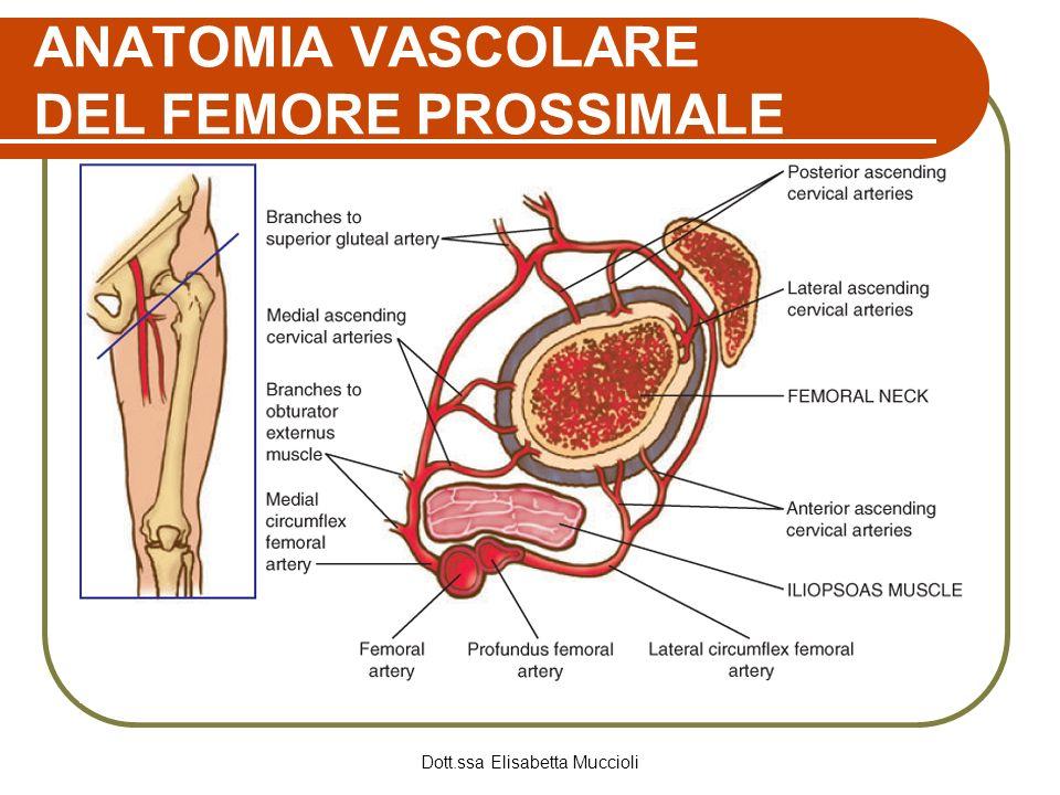 ANATOMIA VASCOLARE DEL FEMORE PROSSIMALE