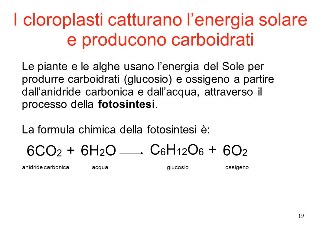 I cloroplasti catturano l'energia solare e producono carboidrati