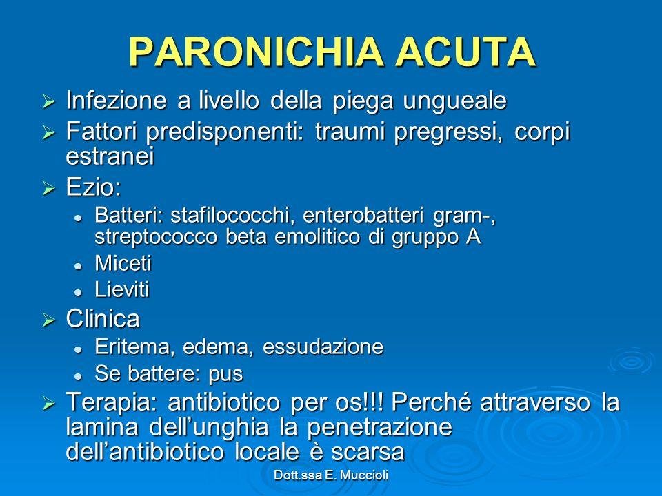 PARONICHIA ACUTA Infezione a livello della piega ungueale