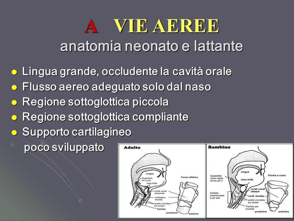 A VIE AEREE anatomia neonato e lattante