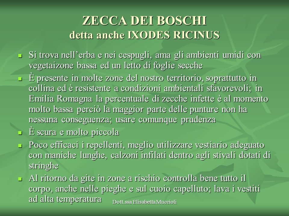 ZECCA DEI BOSCHI detta anche IXODES RICINUS