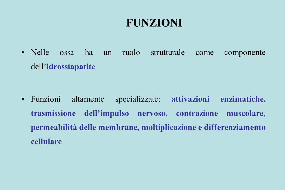 FUNZIONI Nelle ossa ha un ruolo strutturale come componente dell'idrossiapatite.