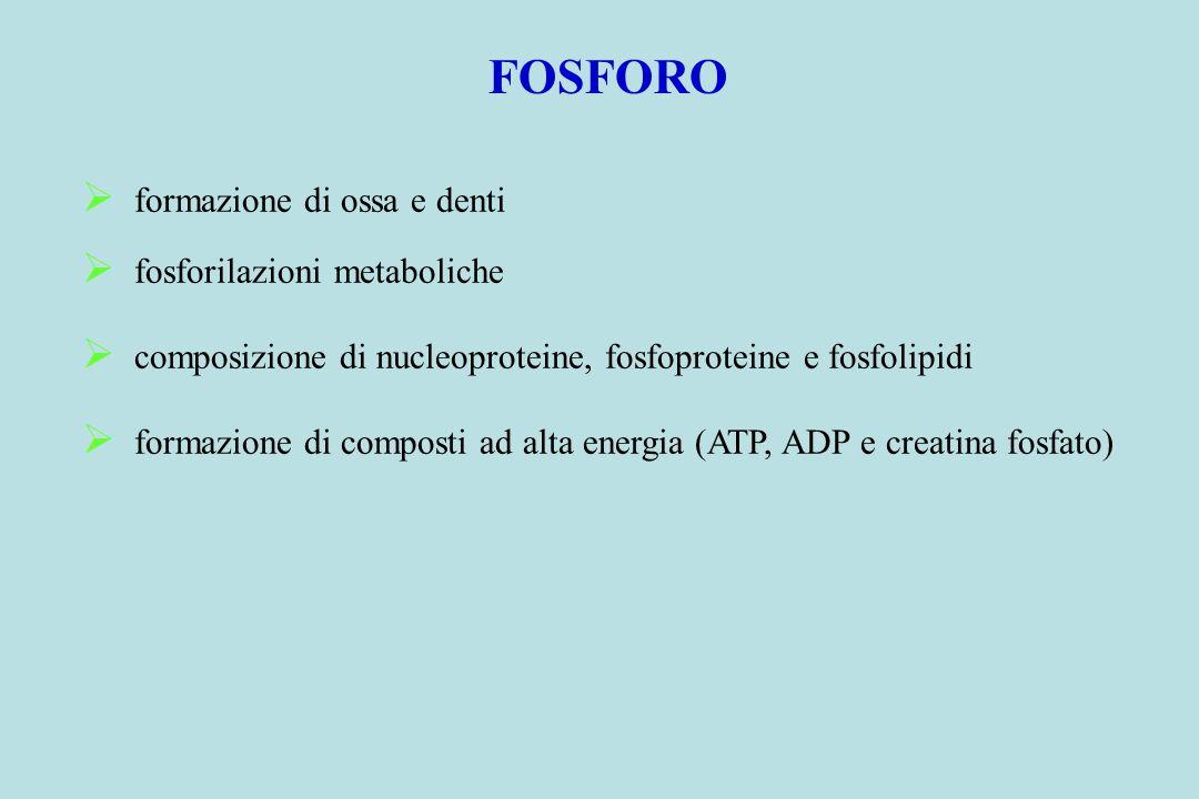 FOSFORO formazione di ossa e denti fosforilazioni metaboliche