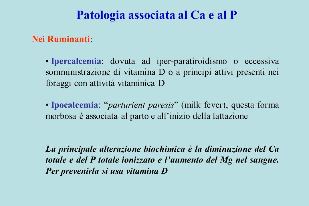 Patologia associata al Ca e al P