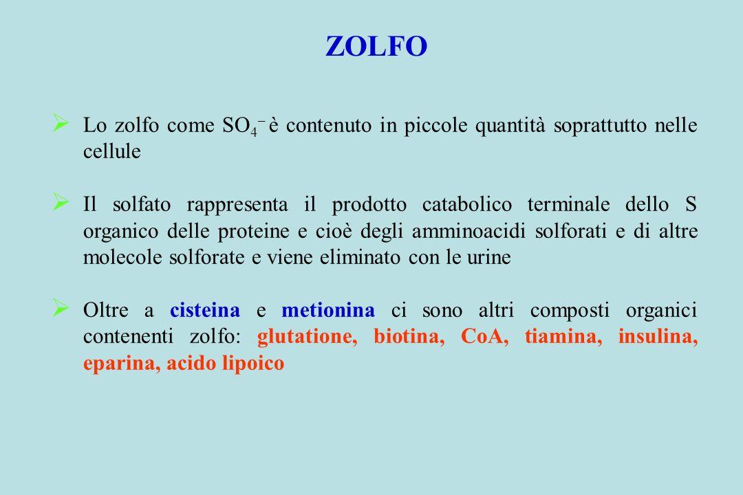 ZOLFO Lo zolfo come SO4– è contenuto in piccole quantità soprattutto nelle cellule.