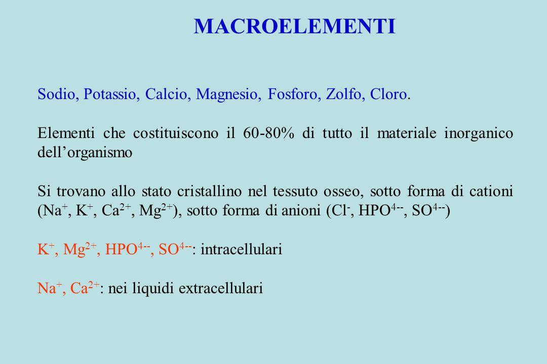 MACROELEMENTI Sodio, Potassio, Calcio, Magnesio, Fosforo, Zolfo, Cloro.