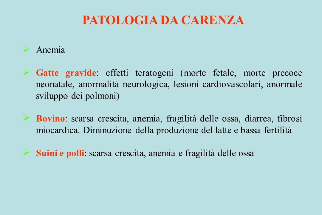 PATOLOGIA DA CARENZA Anemia