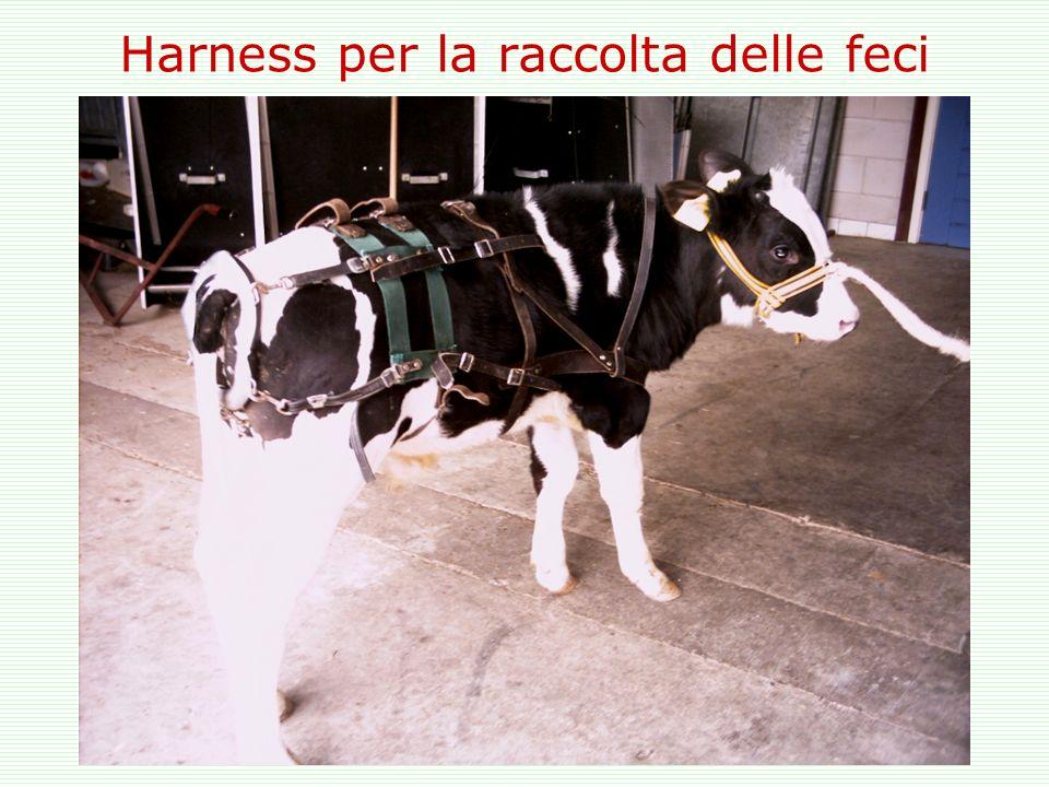 Harness per la raccolta delle feci