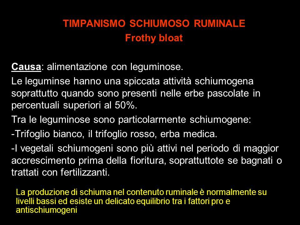 TIMPANISMO SCHIUMOSO RUMINALE