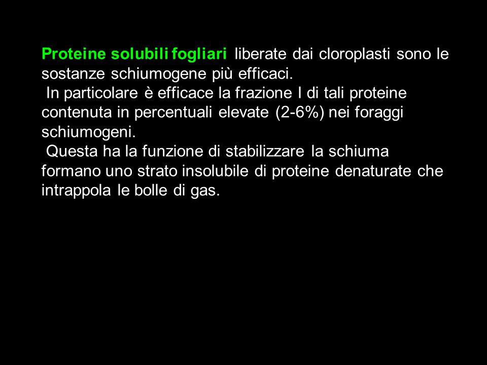 Proteine solubili fogliari, liberate dai cloroplasti sono le sostanze schiumogene più efficaci.