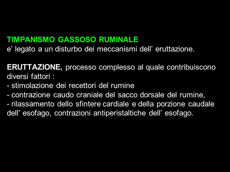 TIMPANISMO GASSOSO RUMINALE e' legato a un disturbo dei meccanismi dell' eruttazione.