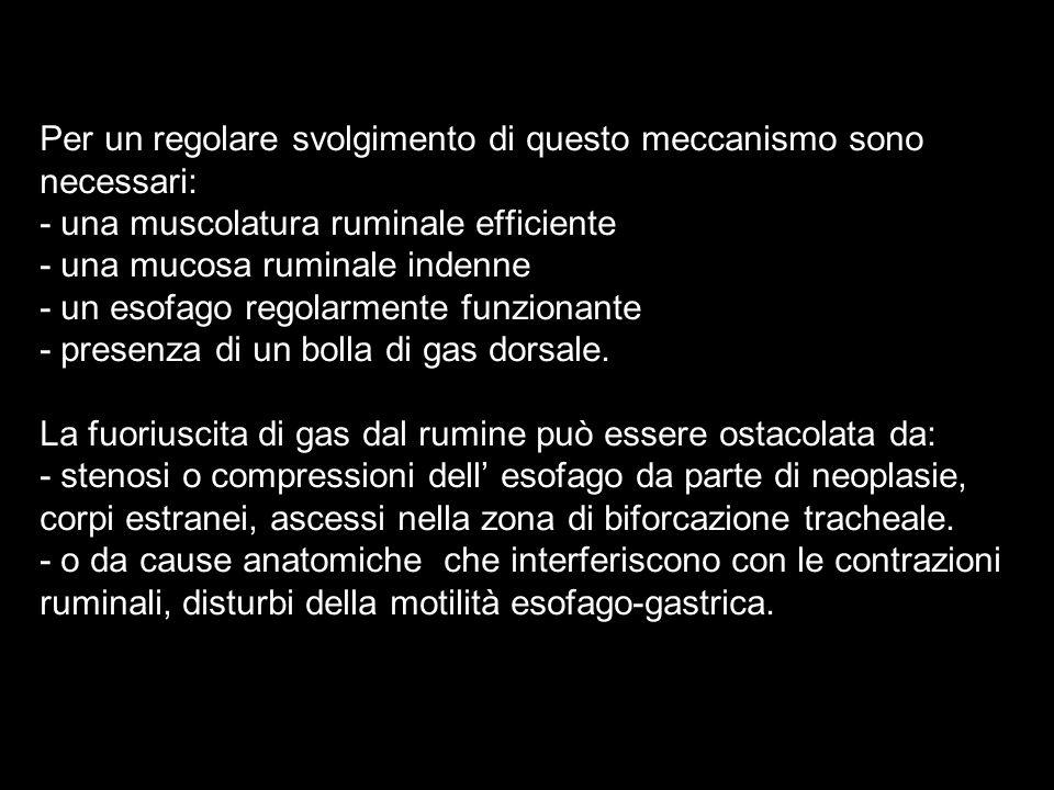 Per un regolare svolgimento di questo meccanismo sono necessari: - una muscolatura ruminale efficiente - una mucosa ruminale indenne - un esofago regolarmente funzionante - presenza di un bolla di gas dorsale.