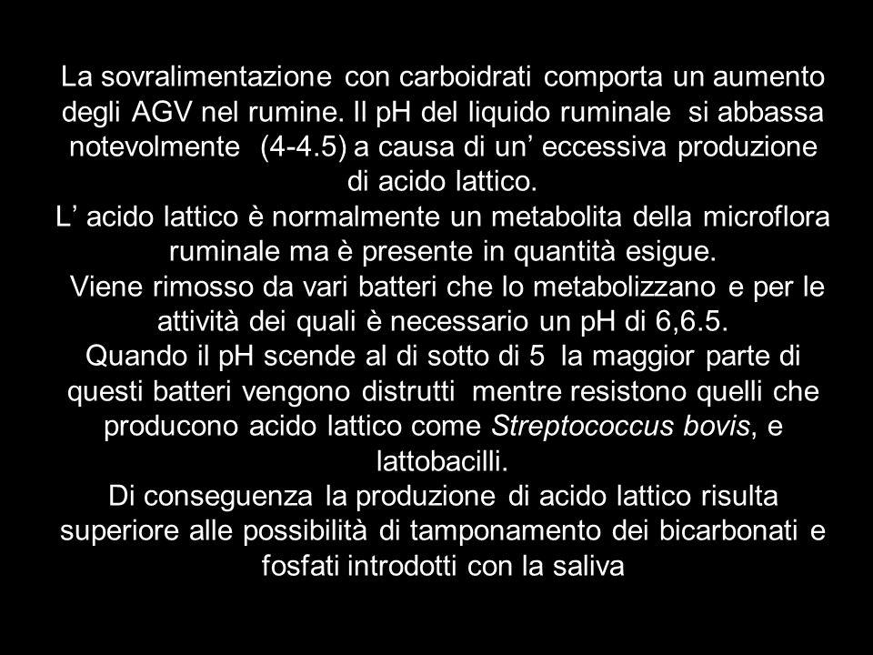 La sovralimentazione con carboidrati comporta un aumento degli AGV nel rumine.