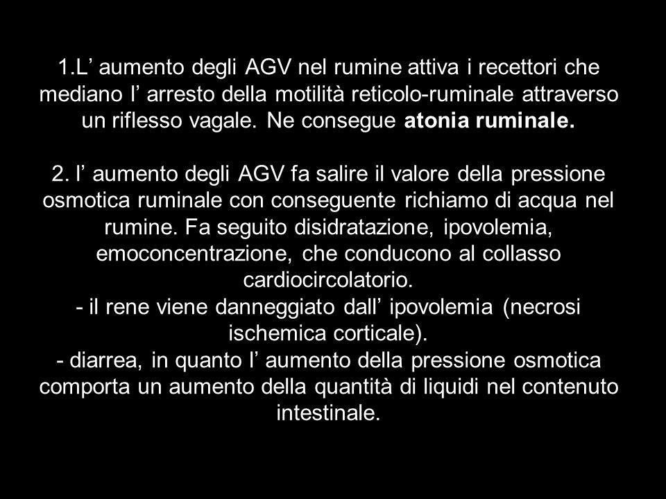 1.L' aumento degli AGV nel rumine attiva i recettori che mediano l' arresto della motilità reticolo-ruminale attraverso un riflesso vagale.