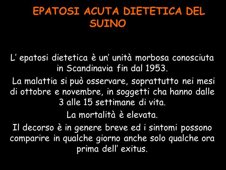EPATOSI ACUTA DIETETICA DEL SUINO
