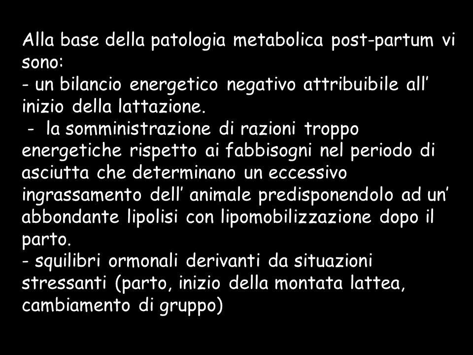 Alla base della patologia metabolica post-partum vi sono: - un bilancio energetico negativo attribuibile all' inizio della lattazione.