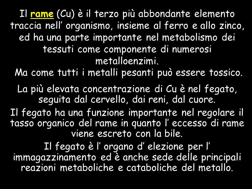 Il rame (Cu) è il terzo più abbondante elemento traccia nell' organismo, insieme al ferro e allo zinco, ed ha una parte importante nel metabolismo dei tessuti come componente di numerosi metalloenzimi. Ma come tutti i metalli pesanti può essere tossico.
