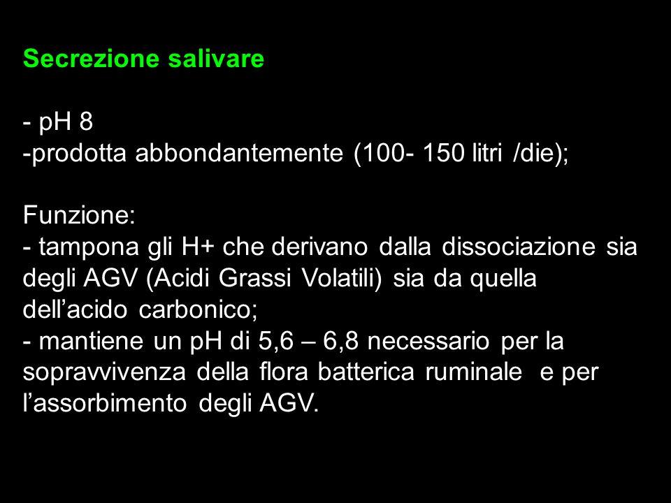 Secrezione salivare - pH 8. prodotta abbondantemente (100- 150 litri /die); Funzione: