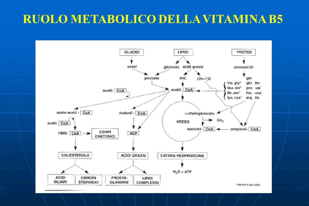 RUOLO METABOLICO DELLA VITAMINA B5