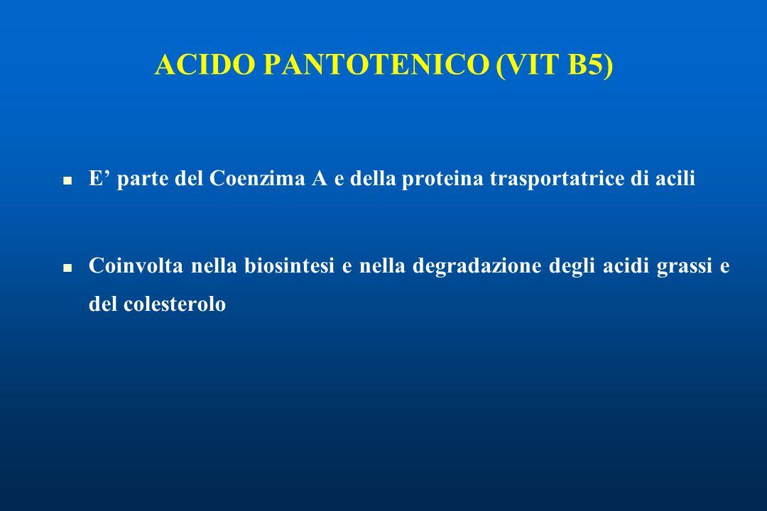 ACIDO PANTOTENICO (VIT B5)