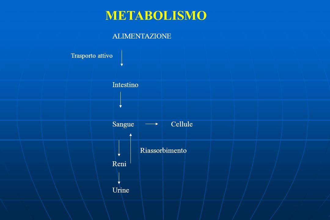 METABOLISMO ALIMENTAZIONE Intestino Sangue Cellule Reni Urine
