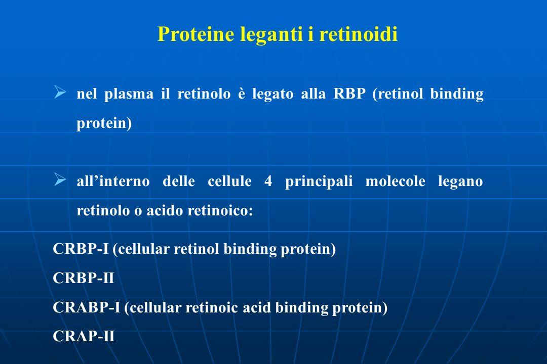 Proteine leganti i retinoidi